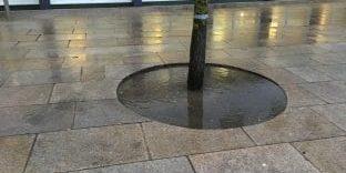 Baumscheibe mit stehendem Wasser