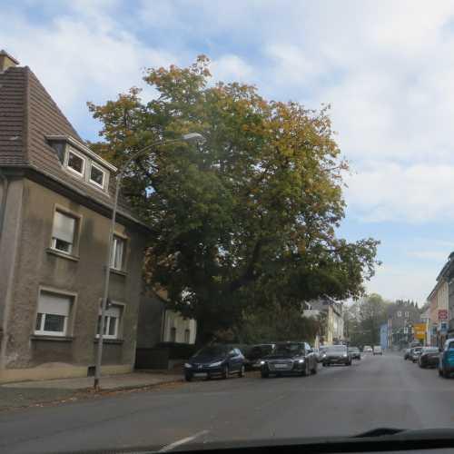 Straßenbaum mit Auffälligkeit