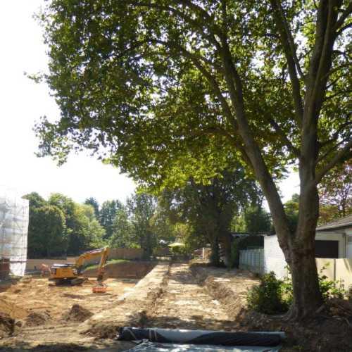 Baum in Baustelle
