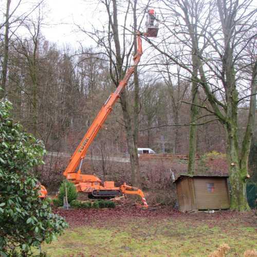 Baumpflege mit Raupen-Arbeitsbühne