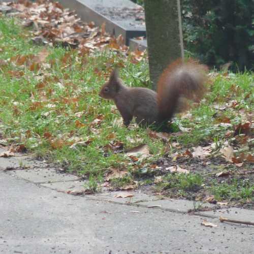 Eichhörnchen Artenschutz