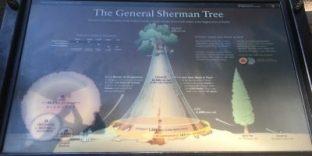Infotafel General Sherman Tree